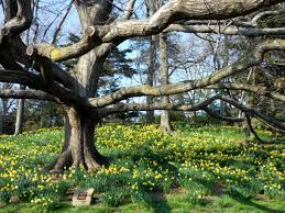 Brooklyn Botanical Garden IV.jpg