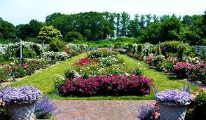 Brooklyn Botanical Garden Rose Night