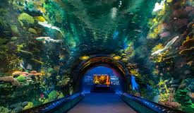 new-york-aquarium-vi.jpg